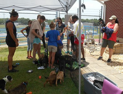 """Ground crew at Enterprise taking care of the pups before they are all loading into the plane to Orlando Apopka Airport. Want to make sure they are all """"pee'd"""" and """"poop'ed"""" out before they take flight."""