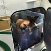 """""""Hey, where are we going now? """"<br /> <br /> ANS: Flying  to Enterprise, AL  then Orlando to Forever Homes!"""