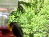 humming bird17