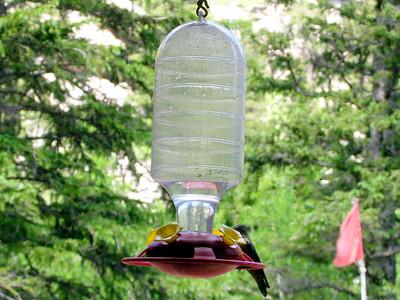 humming bird4