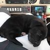Asleep on pilot's lap.