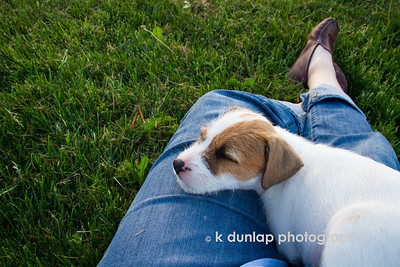 "05.12.15 = Tuckered Out  I typically don't allow clients to fall asleep on my lap after a photo session…..I do however, make a few exceptions.    ""I think dogs are the most amazing creatures; they give unconditional love. For me they are the role model for being alive.""  ~Gilda Radner"