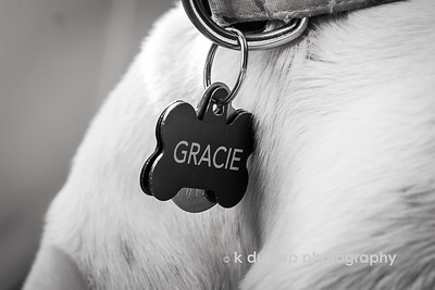 "02.07.16 = Gracie  ""Whoever said that diamonds are a girls best friend never had a dog.""  Unknown"
