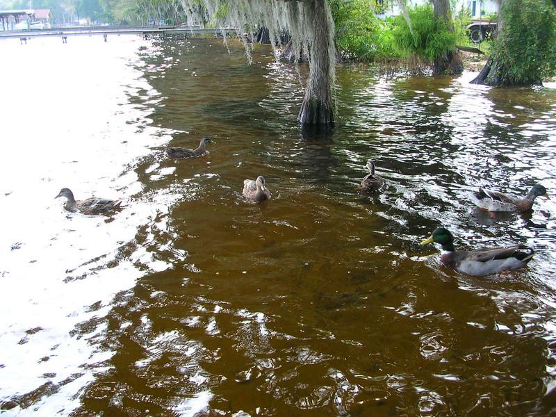 lake waccamaw nc 245