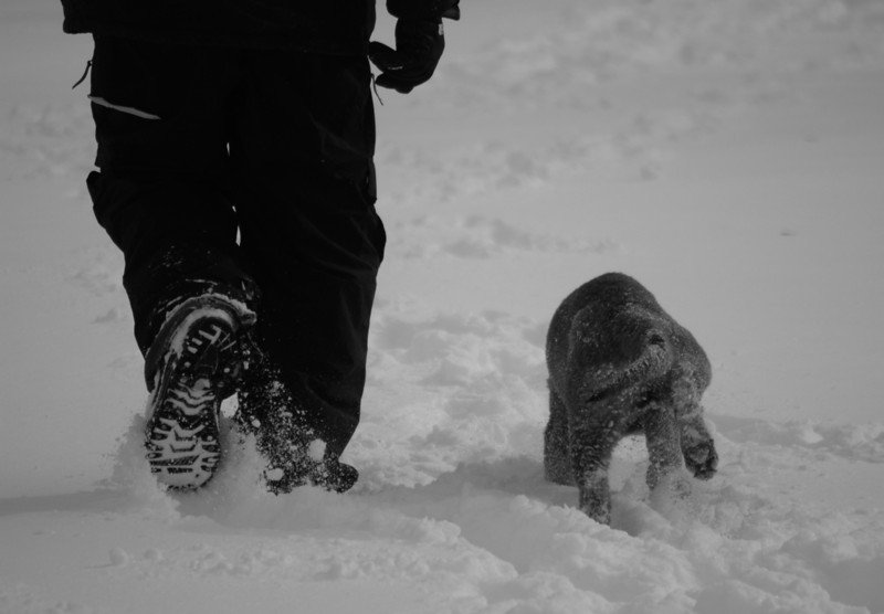 Bill & Kimbo, after the snow