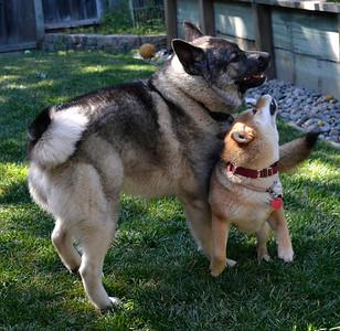 Kal and Mochi
