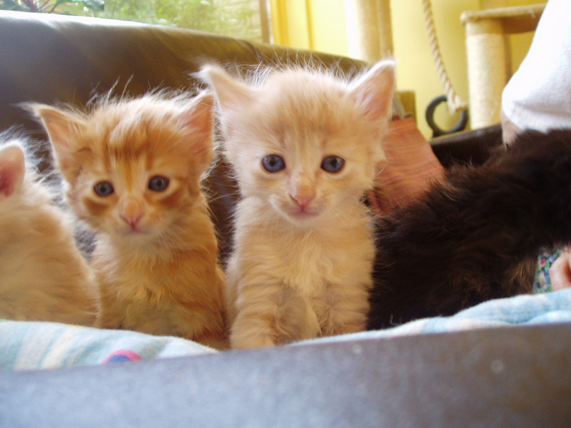Kamal(right) and his brother as babies