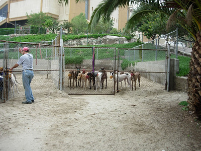 Runs holding the newly-retired hounds:  females on the extreme left, males in the center.