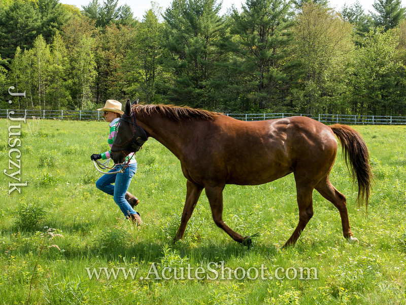 Trotting around the pasture.