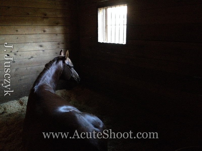 Katty ying down in her stall