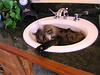 kitten sink 010
