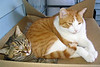 2 cats. 1 box.