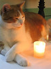 Noble by candlelight