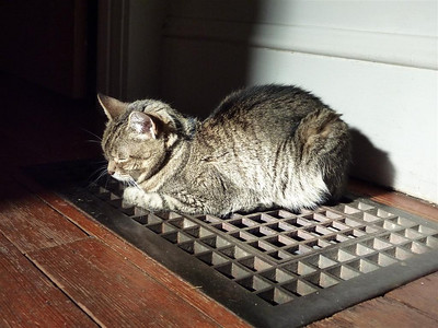 Miki loves sitting on the heater when it's off in the winter. The pilot light burning far below sends heat wafting up to warm her. The sun spot is an added bonus.