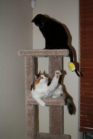Kitty tower