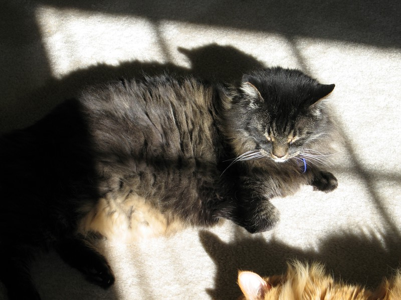 Cats in the morning, Sparhawk