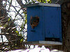 This is supposed to be a bird house, although the squirrel has another opinion. Designed and built by my daughter.