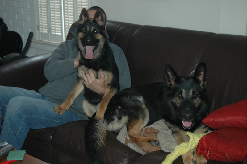 Kway and daughter Fara vom Geistwasser, hanging on the couch :)