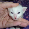 Gwenn (Kyrie)