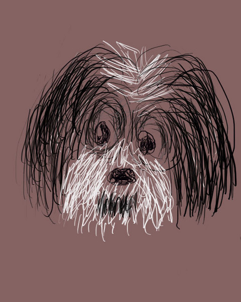 Shih Tzu sketch Banner copy
