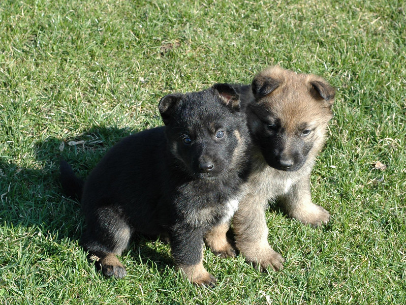 The L Litter Boys :o)