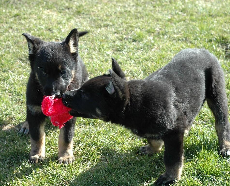 Leila and Leo