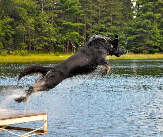 Luna, showing her physical power, dock diving