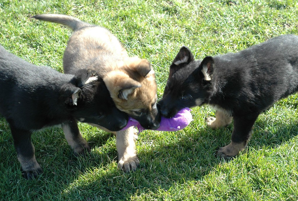 Leo, Lucky and Leila