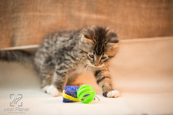 056-Law Kittens Jun2016