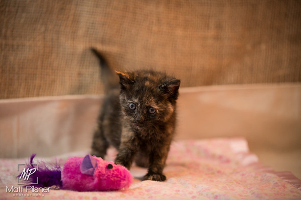016-Law Kittens Jun2016
