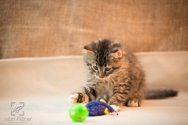 065-Law Kittens Jun2016