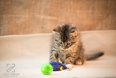 063-Law Kittens Jun2016