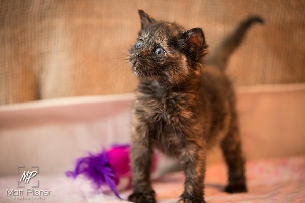 010-Law Kittens Jun2016