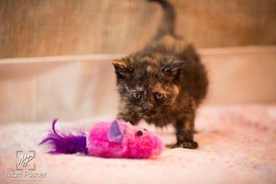 017-Law Kittens Jun2016