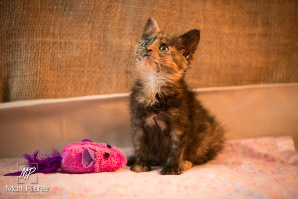 006-Law Kittens Jun2016
