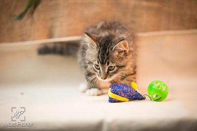 055-Law Kittens Jun2016