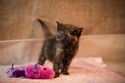 015-Law Kittens Jun2016