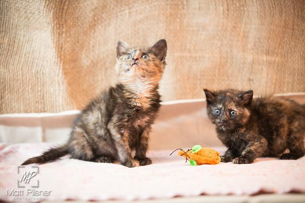 028-Law Kittens Jun2016