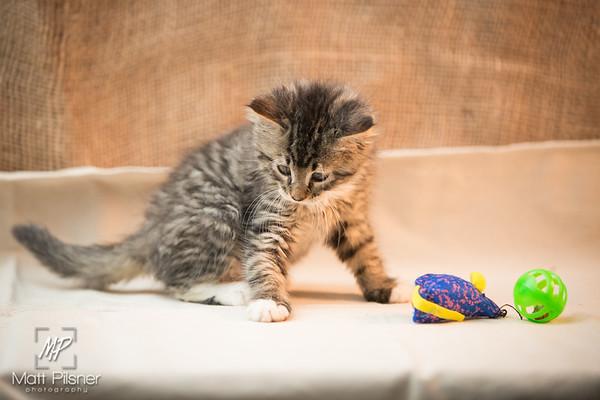 051-Law Kittens Jun2016