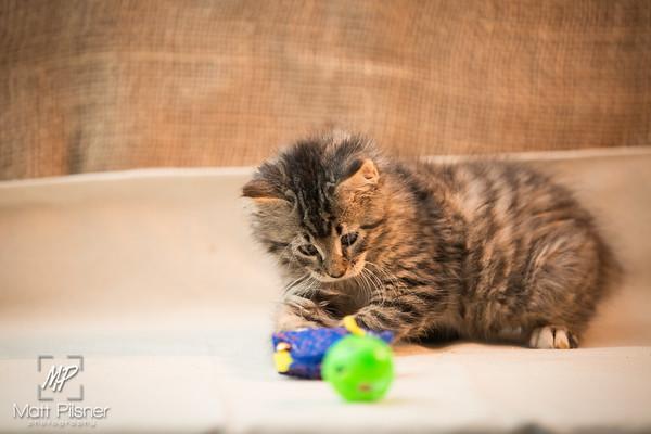 062-Law Kittens Jun2016