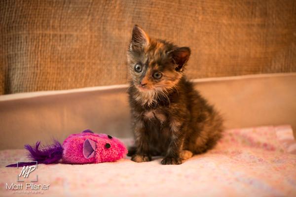 008-Law Kittens Jun2016