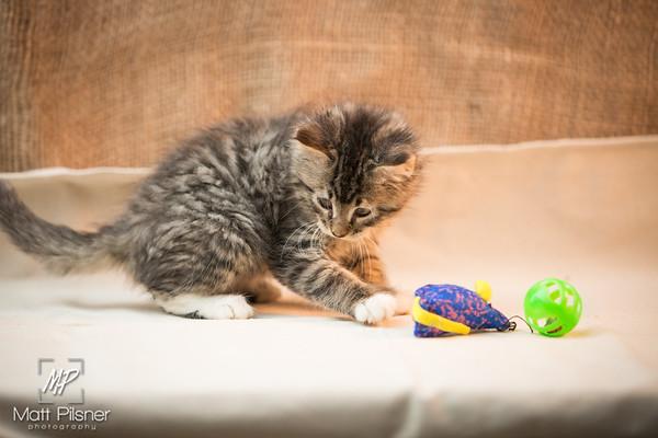 050-Law Kittens Jun2016