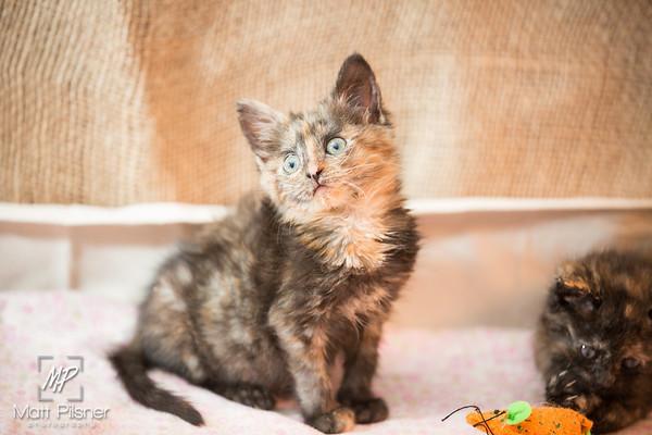 044-Law Kittens Jun2016