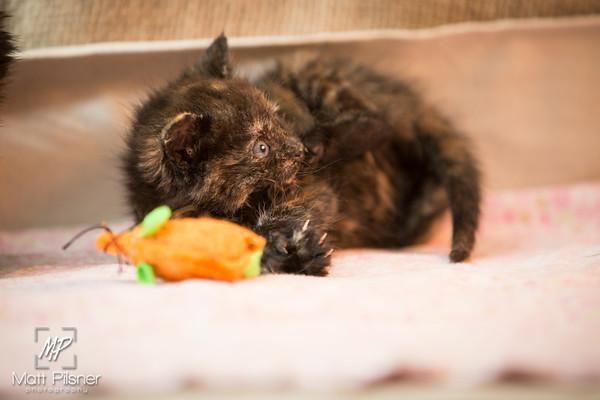 038-Law Kittens Jun2016