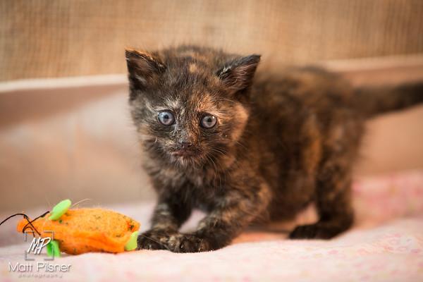 030-Law Kittens Jun2016