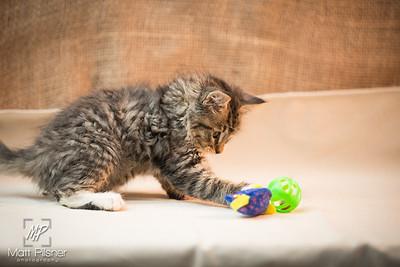 049-Law Kittens Jun2016