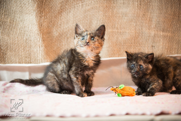 026-Law Kittens Jun2016