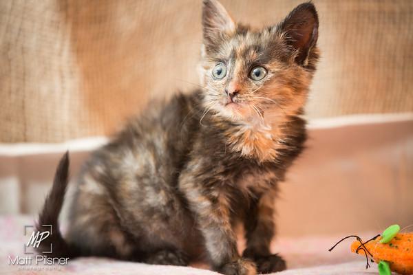035-Law Kittens Jun2016