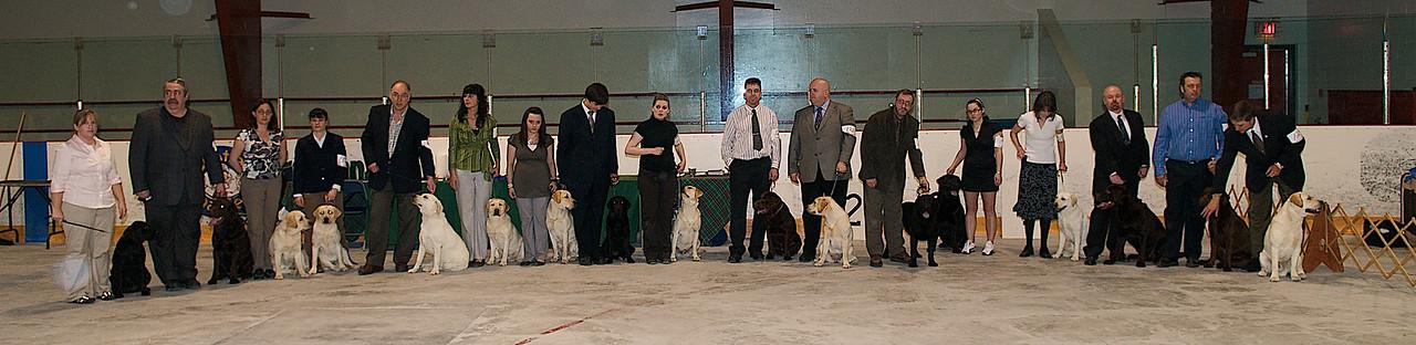 Labrador Retrievers - NKC Show - Goulds