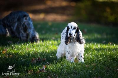 002-LeGoff Dogs